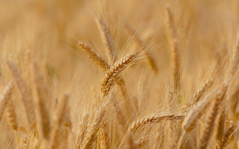 sistemas de seguridad alimentarua